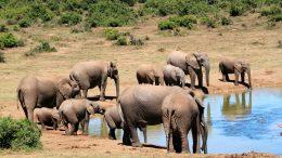 safari-africa-viaggio-nozze