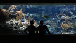 Cattolica, visita all'acquario Le Navi