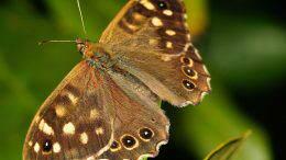La casa delle farfalle, Montegrotto Terme