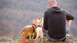 In viaggio con il cane